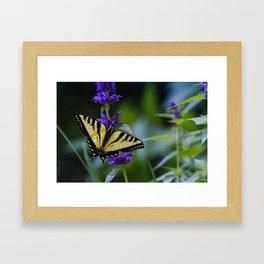 Butterfly on a Purple Flower Framed Art Print