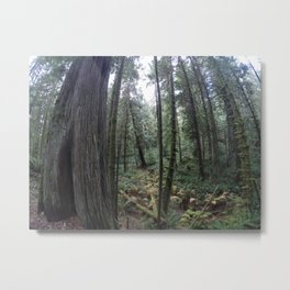 Go pro forest Canada Metal Print