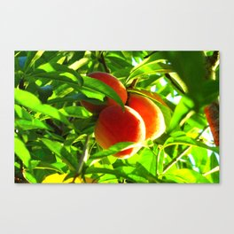 Peaches Canvas Print