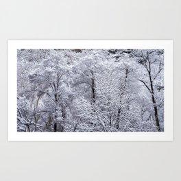 Snow-Capped Trees in Oak Creek Canyon Sedona Art Print