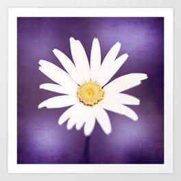 Purple Yellow Photography, Daisy Flower Art, Purple Violet Nature Photo Print Art Print