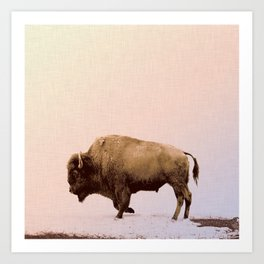 Buffalo Art Print, Animal Photography, Modern Home Decor, Buffalo Art Print, Buffalo Wall Art, Buffalo Picture, Square Print, Buffalo Print Art Print