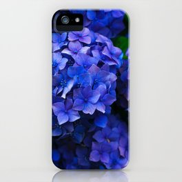 Royal Blue Hydrangea Flowers In Bloom iPhone Case