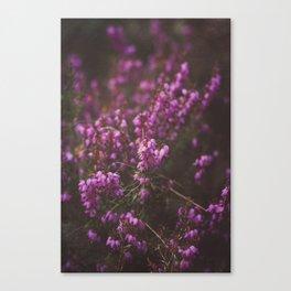 Purple Little Flowers in My Garden Canvas Print