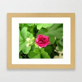Pink flower Framed Art Print