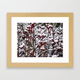 Winterberrys Framed Art Print