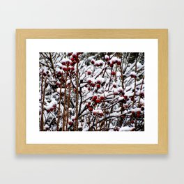 Winterberrys Framed Art Print