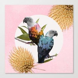 Sun Conure Parrots Canvas Print