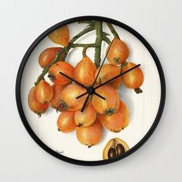 Loquats (Eriobotrya Japonica) (1908) by Amanda Almira Newton Wall Clock