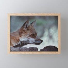 Red Fox in Arizona Framed Mini Art Print