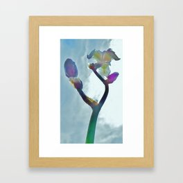 Iris410 Framed Art Print