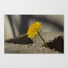 Dandelion That Grew From Concrete Canvas Print