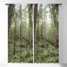 Fern Alley - Redwood Forest Nature Photography Blackout Curtain