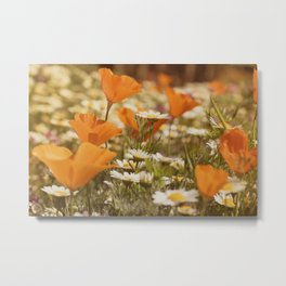 Orange Poppies and Yellow Daisies Metal Print