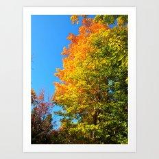 Fall Colors Art Print
