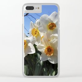 Sunny Faces of Spring - Gold and White Narcissus Flowers Clear iPhone Case