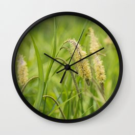 Grass. Pendulous Sedge (Carex pendula) growing wild in damp woodland.  Wall Clock