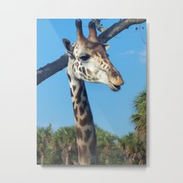 I love the look on this Giraffes face!!! Metal Print