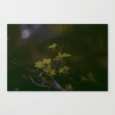 GREEN LEAVES IN THE EARTH  Canvas Print