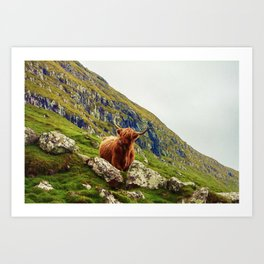 HIGHLAND COW 2 Art Print