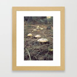 Fungi Framed Art Print