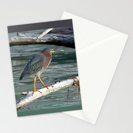 Green Heron Greers Island Longboat Key, FL Stationery Cards