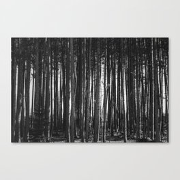 Trees In A Row Canvas Print