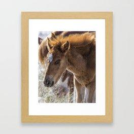 Salt River Sleepy Foal Framed Art Print