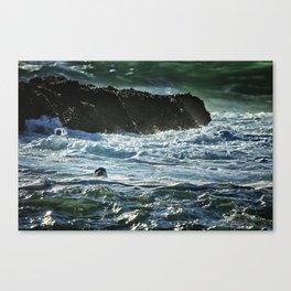 I Spy A Seal Canvas Print