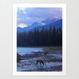 Jasper Elk at Dusk - Canadian Rockies Art Print