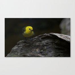Yellow Songbird Canvas Print