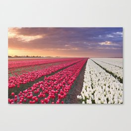 I - Rows of colourful tulips at sunrise in The Netherlands Canvas Print