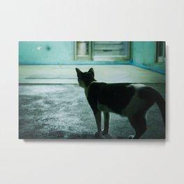 Alley Cat in Bangkok Metal Print