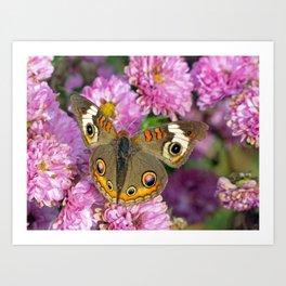Common Buckeye Butterfly Art Print