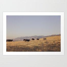 Western Cattle Art Art Print