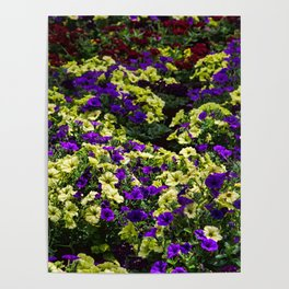Waves of Petunias Poster