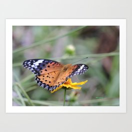 Indian Fritillary in Hangzhou Art Print