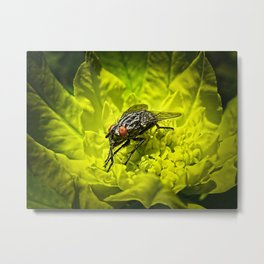 Macro Shot of a Summer Fly Sunbathing on a Yellow Perennial Garden Plant Metal Print