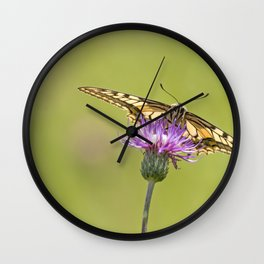Papilio machaon butterfly Wall Clock