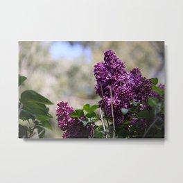 Spring - Lilac Metal Print