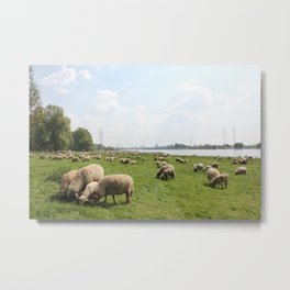 Grazing Sheep by the Rhine Metal Print