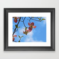 Dogwood Framed Art Print