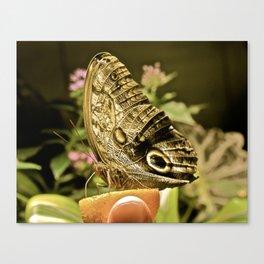 Botanical gardens Canvas Print