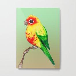 Cute sun conure Metal Print