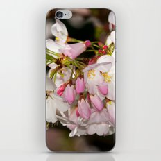 Bee & Cherry Blossoms iPhone Skin