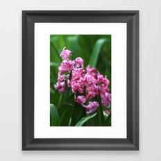 Hyacinth power Framed Art Print