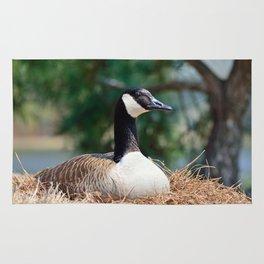 Nesting Canadian Goose Rug