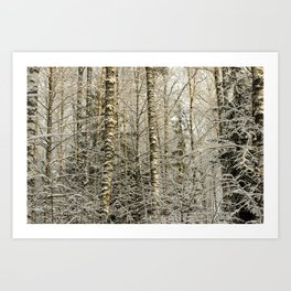 Wintery Forest Art Print