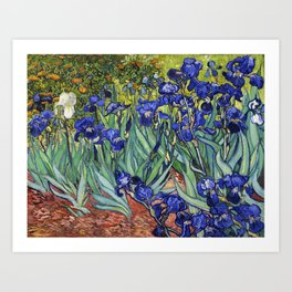 Irises by Vincent van Gogh Art Print
