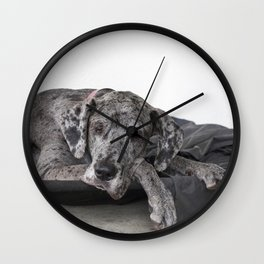 Great Dane waiting Wall Clock